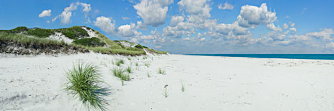 Sea shore view with sand grass and dune reeds. Digital panorama.