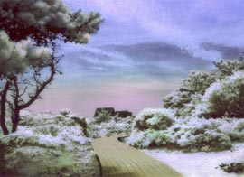 Boardwalk through the Pines. Surreal infrared digital photo.