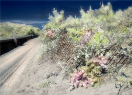Colorized print made from a digital photograph taken with Minolta infrared camera